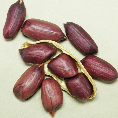 Erdnuess violett
