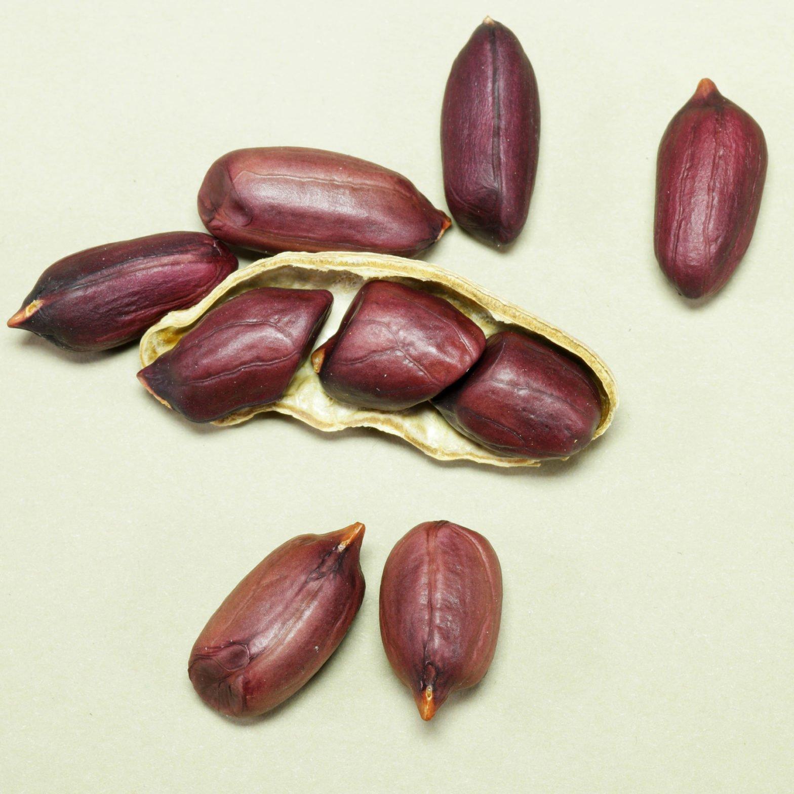 Erdnüsse violett